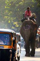 Невероятные приключения австралийца в Индии