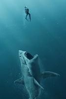 Постеры: в плену акулы и судной ночи