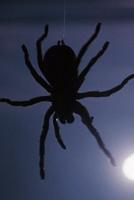 Боитесь ли вы пауков?