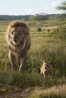 Бокс-офис США: Тарантино погнался за Королем Львом
