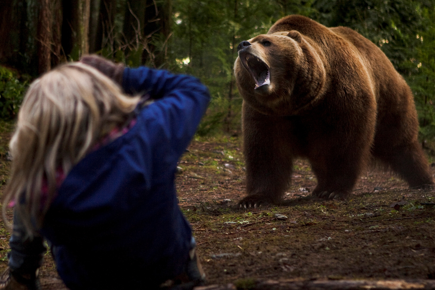Night of the Grizzly - The Complete Tim Treadwell Report and Bear attack last photo